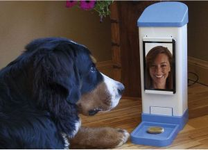 Teenager invents way to videochat with your pet, give it treats