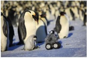 Robotic Chick Lets Researchers Get Close to Penguins