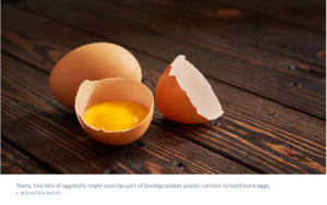 Eggshells help hatch a new idea for packaging