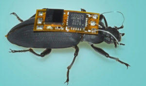 BRIEF: The World's Smallest Remote-controlled Cyborg Bug