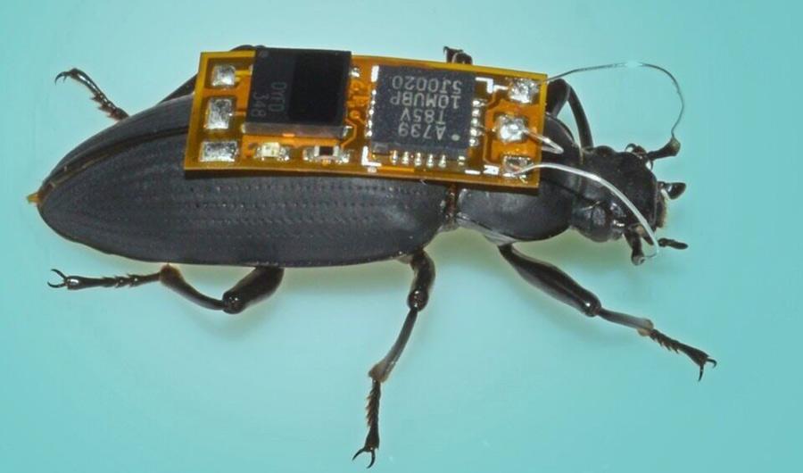 192-InsideScience-Woo-SmallestRt-cntrlledcyborgbug