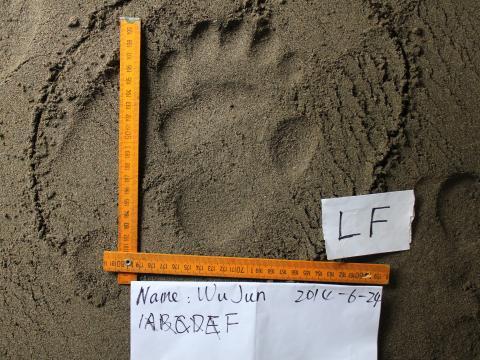 binbin li panda footprint image 2