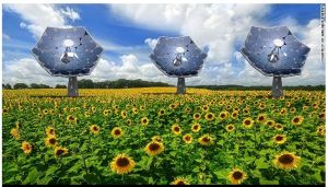 Solar sunflower inspired by nature could bring clean energy anywhere